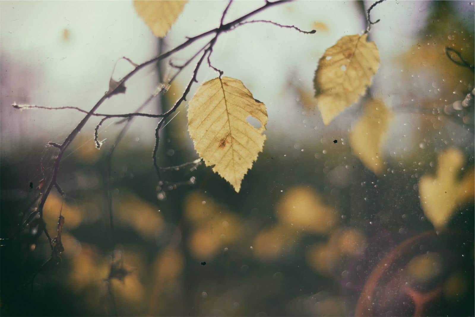 hojas_2