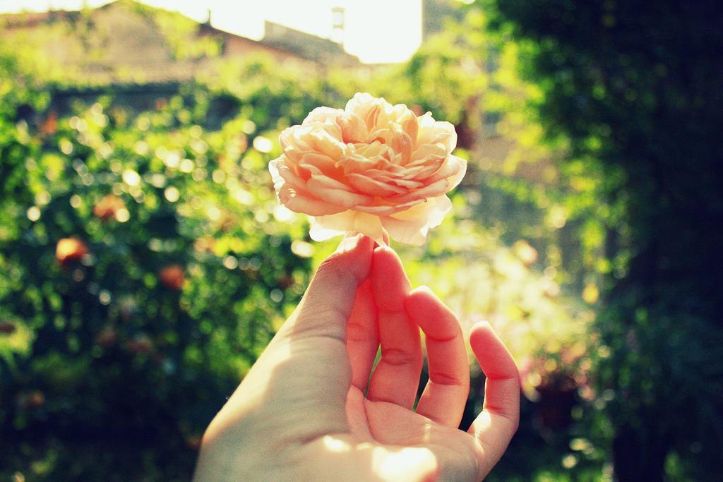 gratitud: 3 hábitos diarios para vivir agradecidos
