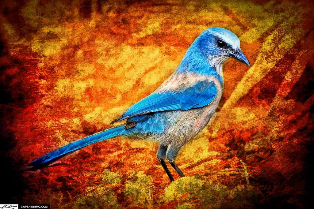 """Qué significa el poema """"El pájaro azul"""" de Bukowski"""
