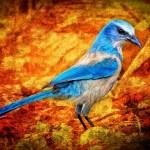 Reflexiones sobre el pájaro azul que está dentro de ti