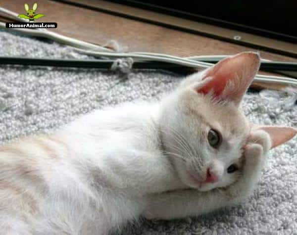 gato-preocupado-108